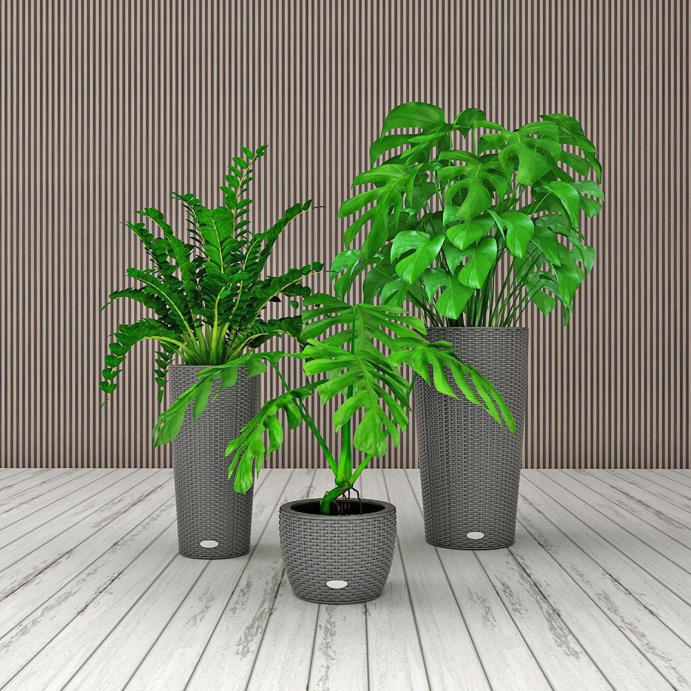 现代龟背竹盆栽组合模型